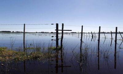 Campos argentinos en emergencia
